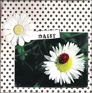 06 daisy