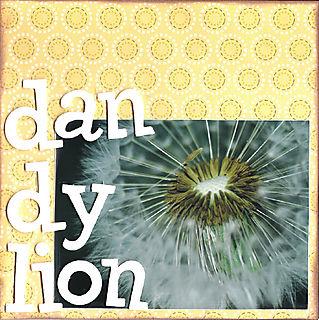 06 dandylion