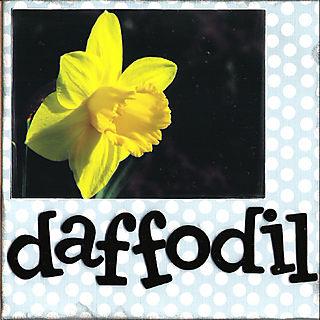06 daffodil