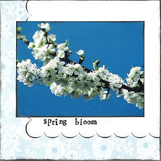 06 spring bloom