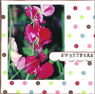 06 sweetpeas