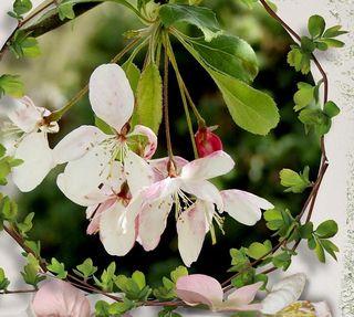 Graciousness flowers