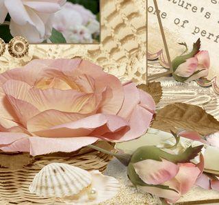 Joy close rose