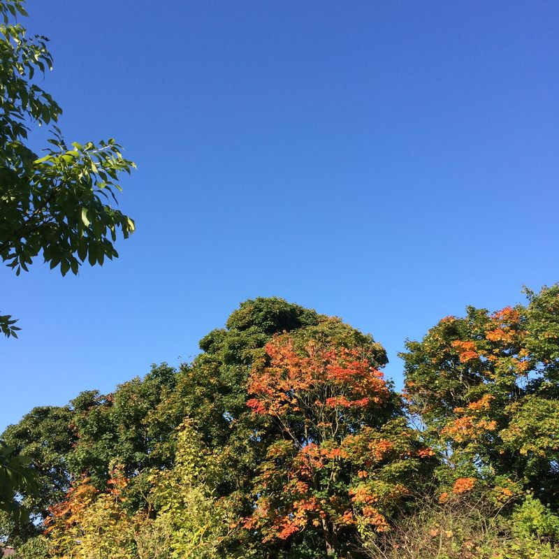 Autumn 2015
