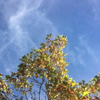 Autumn 2016 change of season